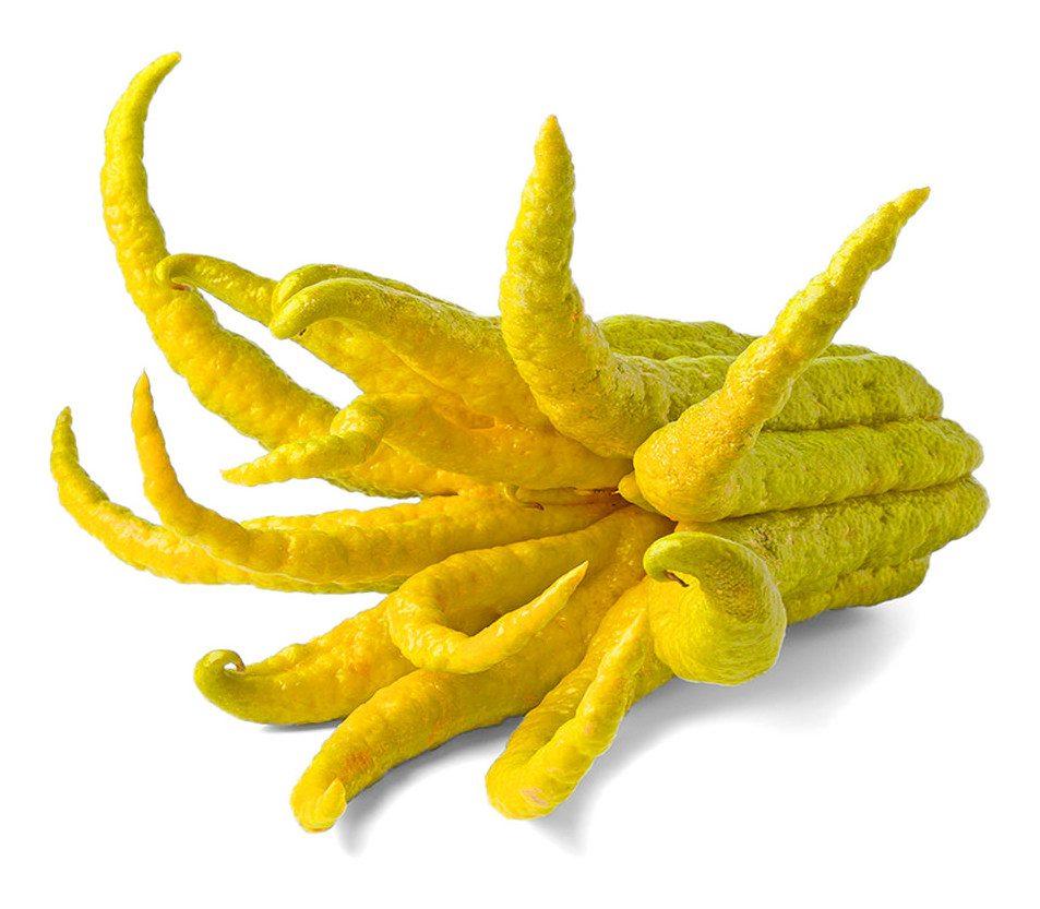 Buddha's Hand Citron Image