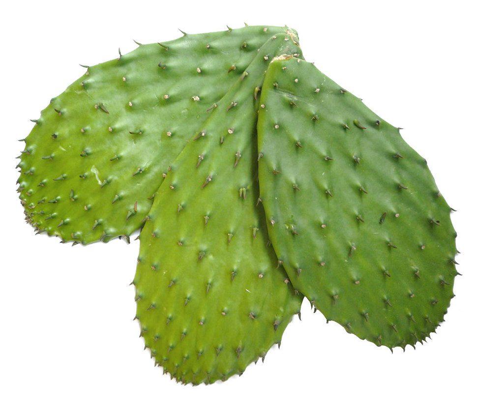 Cactus Pads Image