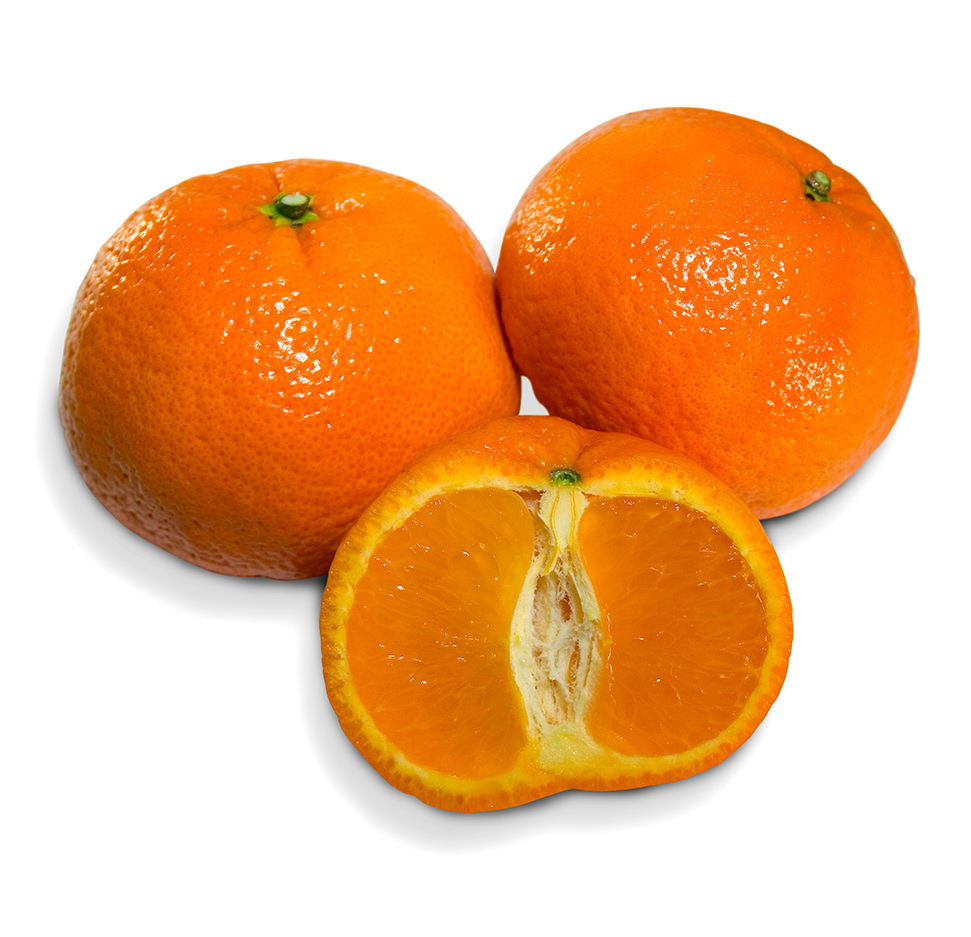 Shasta Mandarin Image