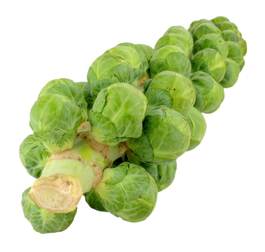 Brussels Sprout Stalks Image