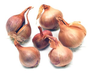 Frieda's Specialty Produce - Frieda's Flavor Essentials - Shallots