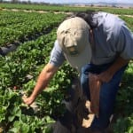 Frieda's Specialty Produce - What's on Karen's Plate? - Picking strawberries with A.G.
