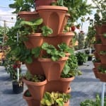 Frieda's Specialty Produce - What's on Karen's Plate? - Vertical garden