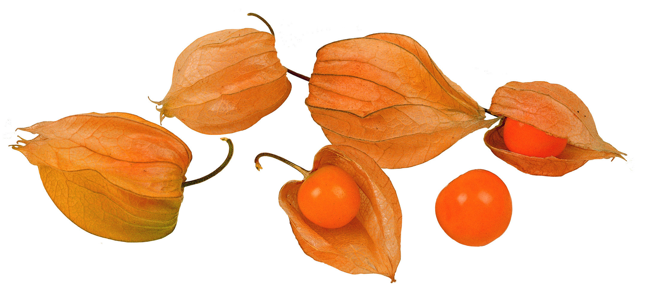 Frieda's Specialty Produce - Cape Gooseberries