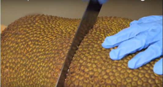 Frieda's Specialty Produce - How to open a jackfruit