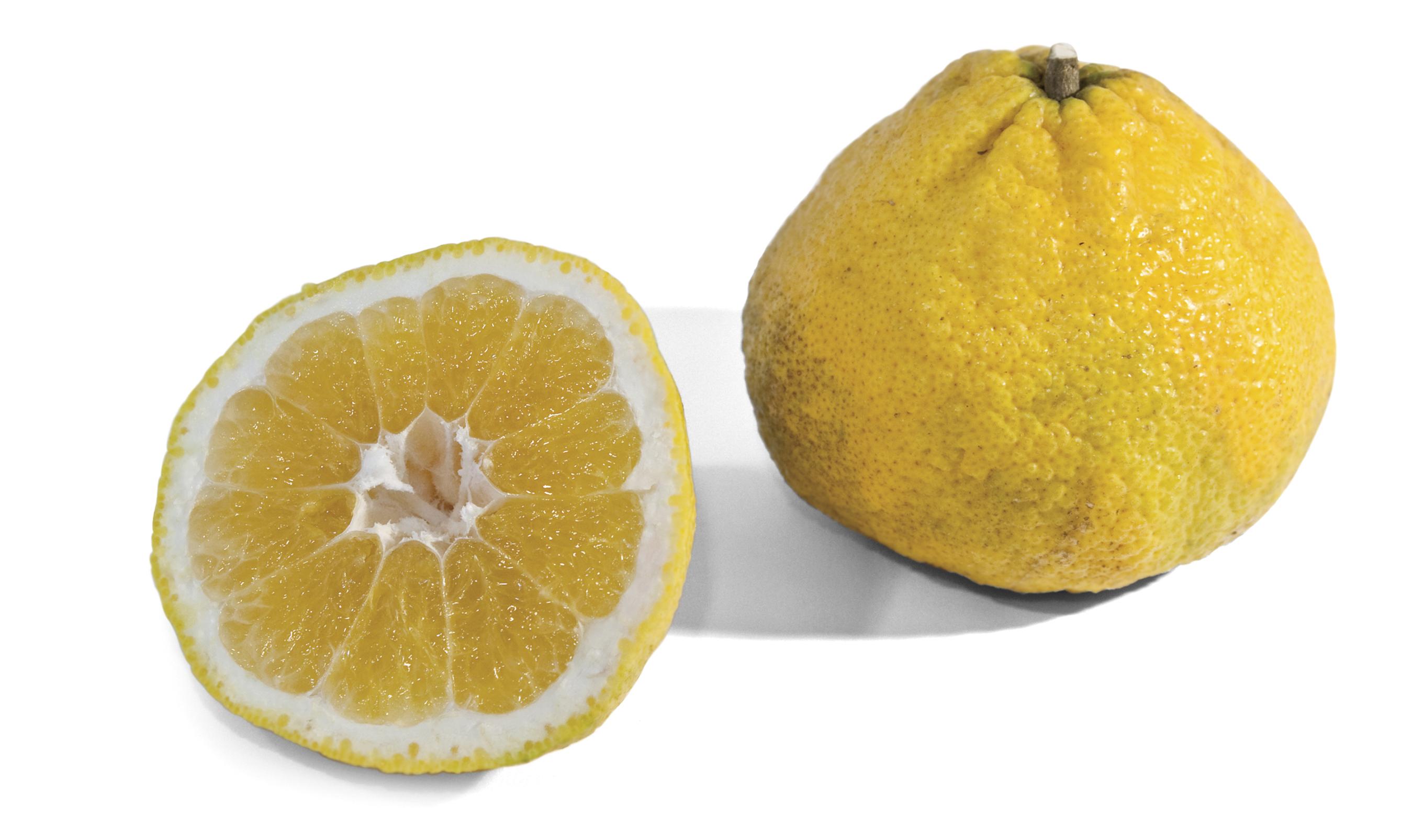 Frieda's Specialty Produce - Ugli Fruit - Uniq Fruit